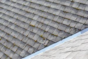 Moss and Algae Build Up On Roof